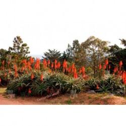 Plantas y Flores Alboretum Lussich